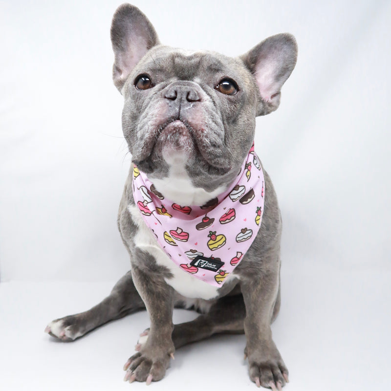Dog Bandana - Piece Of Cake - Blue Paw Co.