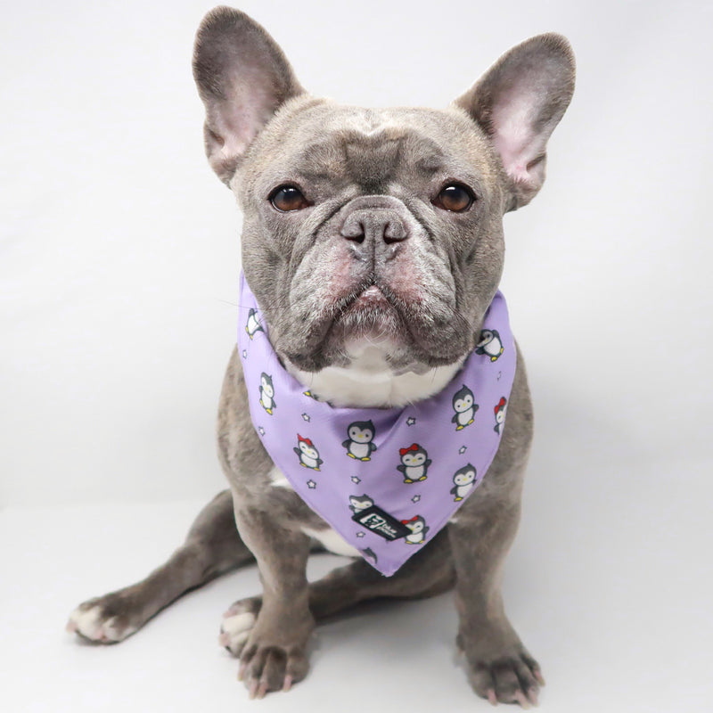 Dog Bandana - Frosty Feet - Blue Paw Co.