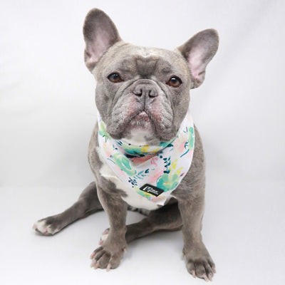 Cooling Dog Bandana - Sweet & Simple