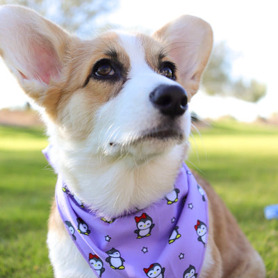 Cooling Dog Bandana - Frosty Feet (Final Sale)