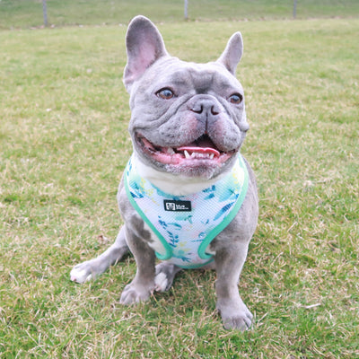 Classic Dog Harness - Sweet & Simple