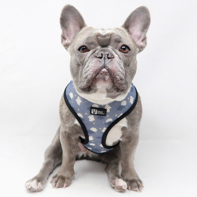 Reversible Dog Harness - Milky Way