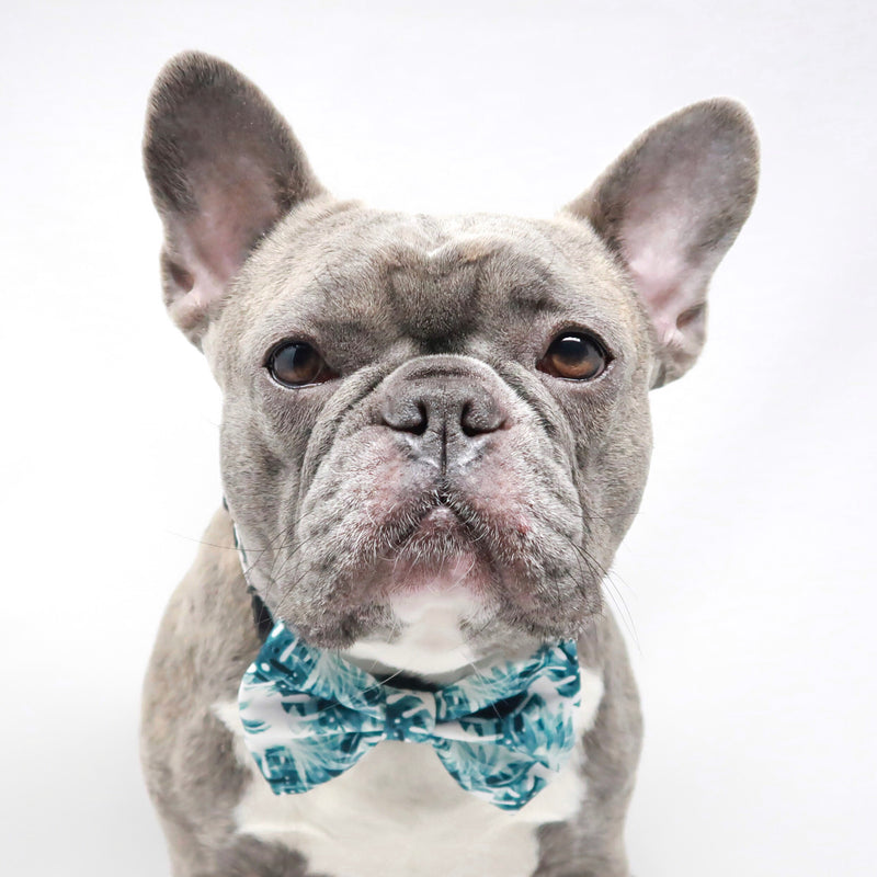 Dog Bow Tie - Posh Palms - Blue Paw Co.