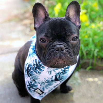 Cooling Dog Bandana - Posh Palms