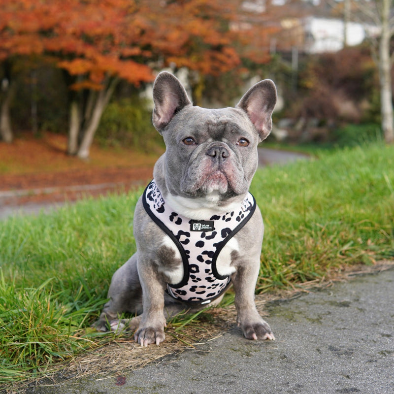 Adjustable Dog Harness - Leopard