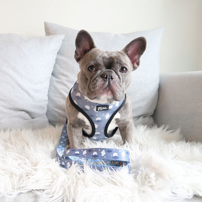 Reversible Dog Harness - Milky Way - Blue Paw Co.