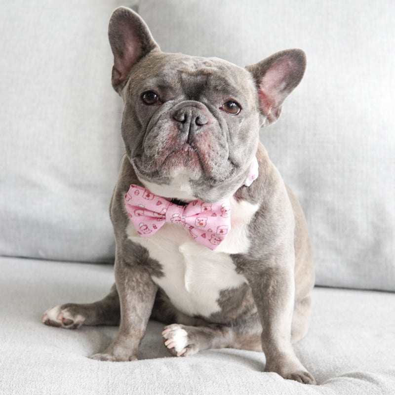 Dog Bow Tie - Piggin' Out