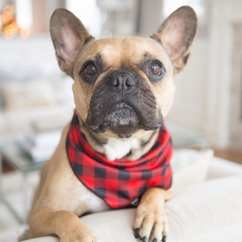 Cooling Dog Bandana - Ruffalo Plaid