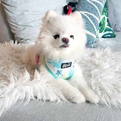 Classic Dog Harness - Sweet & Simple - Blue Paw Co.