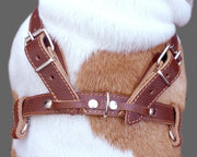 "Genuine Brown Leather Dog Pulling Walking Harness Large. 30""-34"" Chest 1"" Wide Straps, Padded"
