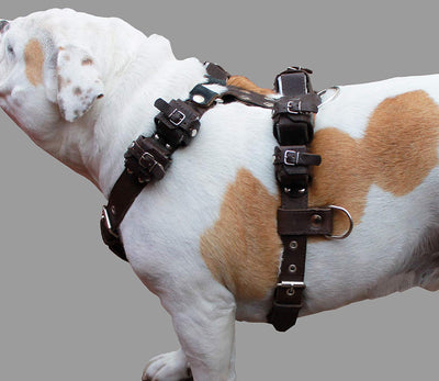 10 Lbs Brown Genuine Leather Weighted Pulling Dog Harness Exercise and Training Fits 35