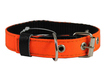 Double Thick Nylon Dog Collar Leather Enforced Metal Buckle Sized to Fit 11