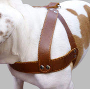 "Brown Leather Dog Harness, Large. 28""-34"" Chest, 1.5"" Wide Straps, Rottweiler Bulldog"
