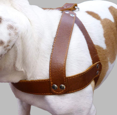 Brown Leather Dog Harness, Large. 28