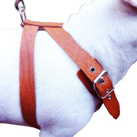 "Orange Genuine Leather Dog Harness, Medium. 25""-30"" Chest, 1"" Wide Adjustable Straps"