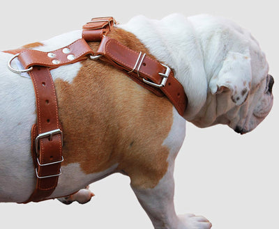Brown Genuine Leather Dog Harness. 28