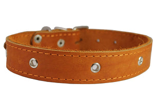 "Genuine Leather Studded Dog Collar, 1.25"" Wide. Fits 15""-18.5"" Neck. Amstaff"