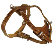 "Genuine Leather Dog Harness, 16.5""-20"" Chest size, 1/2"" Wide, Boston Terrier"