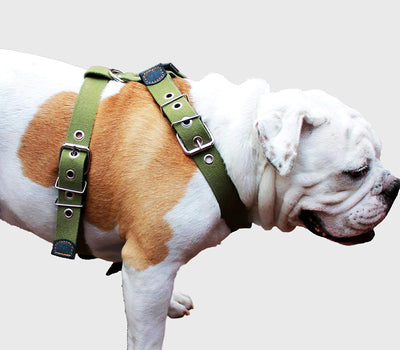 Cotton Web Dog Harness XLarge. Fits Girth 35