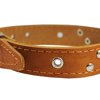 "Genuine Leather Studded Dog Collar, Tan, 1"" Wide. Fits 13""-17.5"" Neck Size"