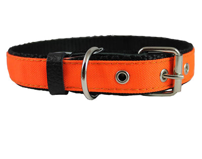 Double Thick Nylon Dog Collar Leather Enforced Metal Buckle Sized to Fit 14