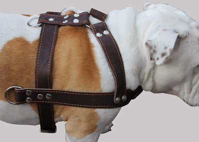 Brown Genuine Leather Dog Pulling Harness 33