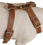 "Genuine Leather Dog Harness, 25""-30"" Chest, 1"" Wide Adjustable Straps for Medium and Large Dogs"