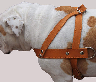 Tan Leather Dog Pulling Walking Harness Large. 31