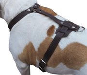 "Genuine Leather Dog Harness, 37""-45"" Chest, 1"" Wide Straps. XXLarge. Newfoundland, Mastiff"