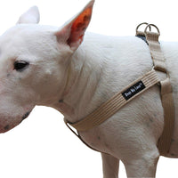 Cotton Web Adjustable Dog Step-in Harness 4 Sizes Beige