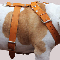 "Tan Genuine Leather Dog Harness 30""-35"" chest. Will fit for Large Breeds."
