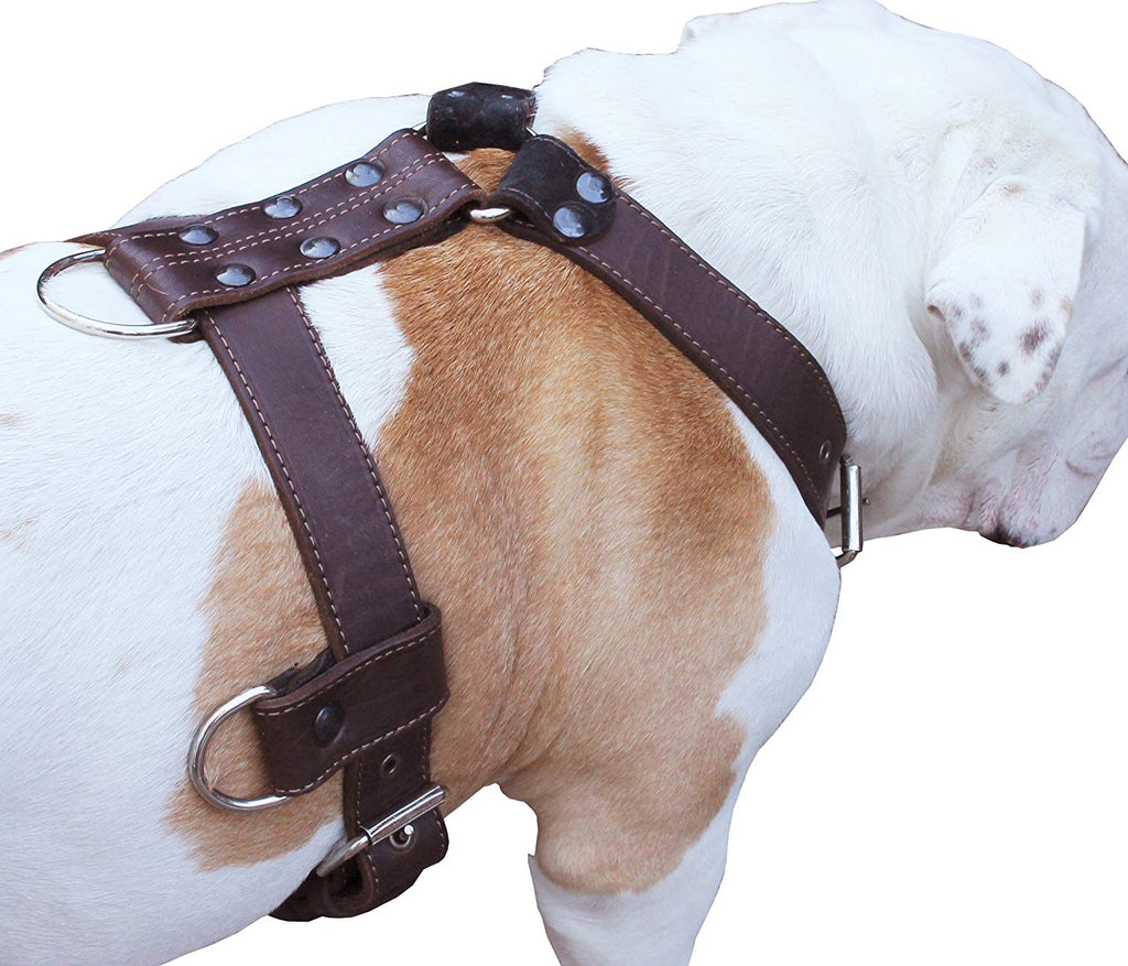 "Genuine Leather Dog Harness X-Large 33""-40"" Chest, 1.3"" Wide Adjustable Straps"