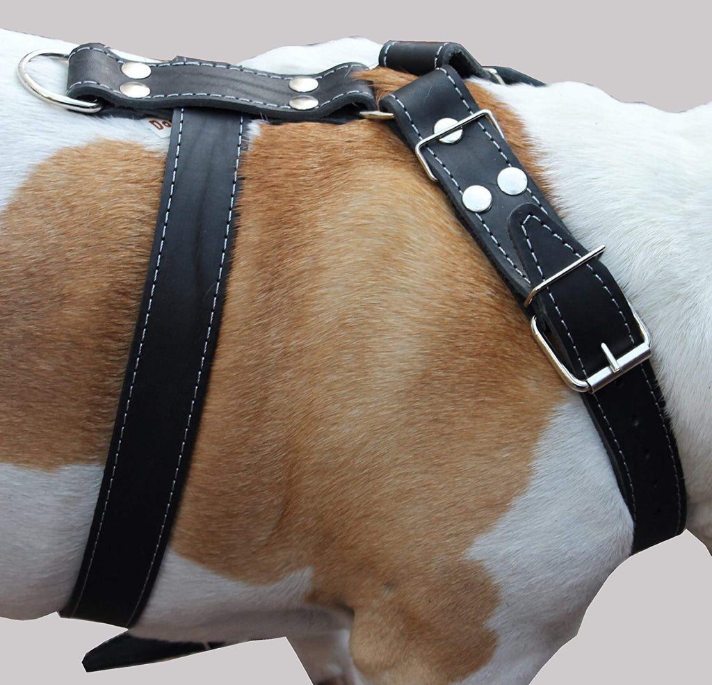 Black Genuine Leather Dog Harness Large. 30-35 Chest, 1.5 Wide Straps Pitbull, Boxer
