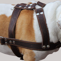 "Brown Genuine Leather Dog Pulling Harness 33""-37"" Chest Size 1.5"" Wide Straps, Cane Corso Mastiff"