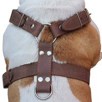 "Brown Genuine Leather Dog Harness, Xlarge. 33""-37"" Chest, 1.5"" Wide Straps"