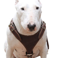 "Brown Genuine Leather Dog Harness, Medium. 25""-30"" Chest, 1"" Wide Adjustable Straps"