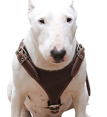 Brown Genuine Leather Dog Harness, Medium. 25