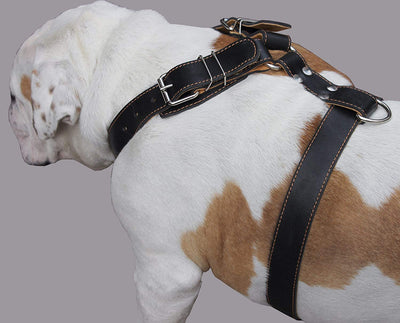 Genuine Leather Dog Harness. 31