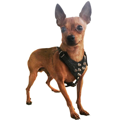 Black Genuine Leather Spiked Dog Harness for Small Dogs 13