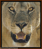 Cross Stitch Pattern *PDF File* ( Pattern ) - LION ! *PDF File*