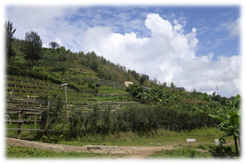 Looking out onto a hill of one of the coffee farms near the Maheme washing station