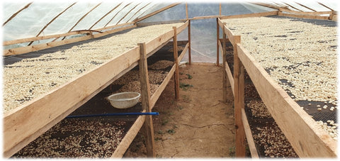 Raised Coffee Drying Bed