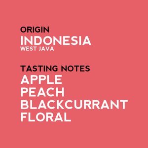 New Arrival - Frinsa Ateng Indonesian Single Origin Coffee - Tasting notes
