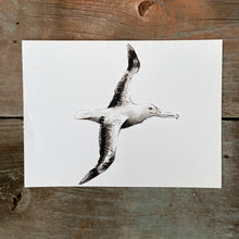 Load image into Gallery viewer, DIOMEDEIDAE - ALBATROS