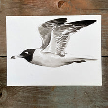 Load image into Gallery viewer, CROICOCEPHALUS RIDIBUNDUS - GAVIOTA REIDORA