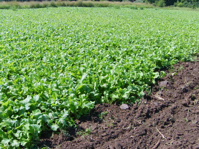 Establishing Success with your Food Plot