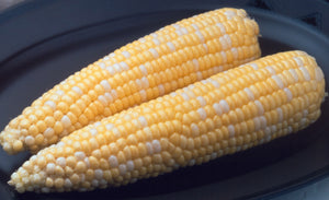 AMBROSIA BI-COLOR SWEET CORN 1/2 LB.