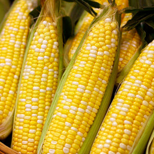 EARLY XTRA SWEET YELLOW CORN 1/2 LB.
