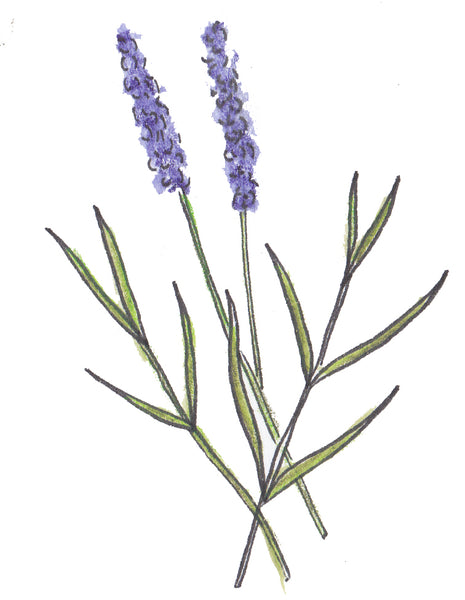 Room Freshener Spray - Lavender