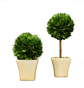 Preserved Mini Boxwood - 2pc Set